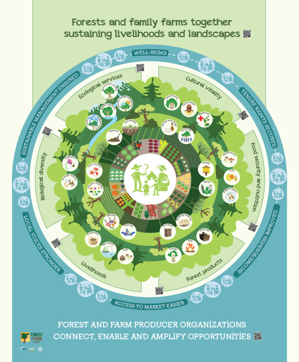 INFOGRAPHIC: Forests and family farms sustaining landscapes